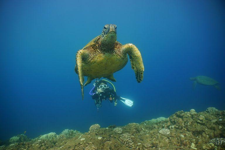 夏季限定 ノースショア 体験ダイビング