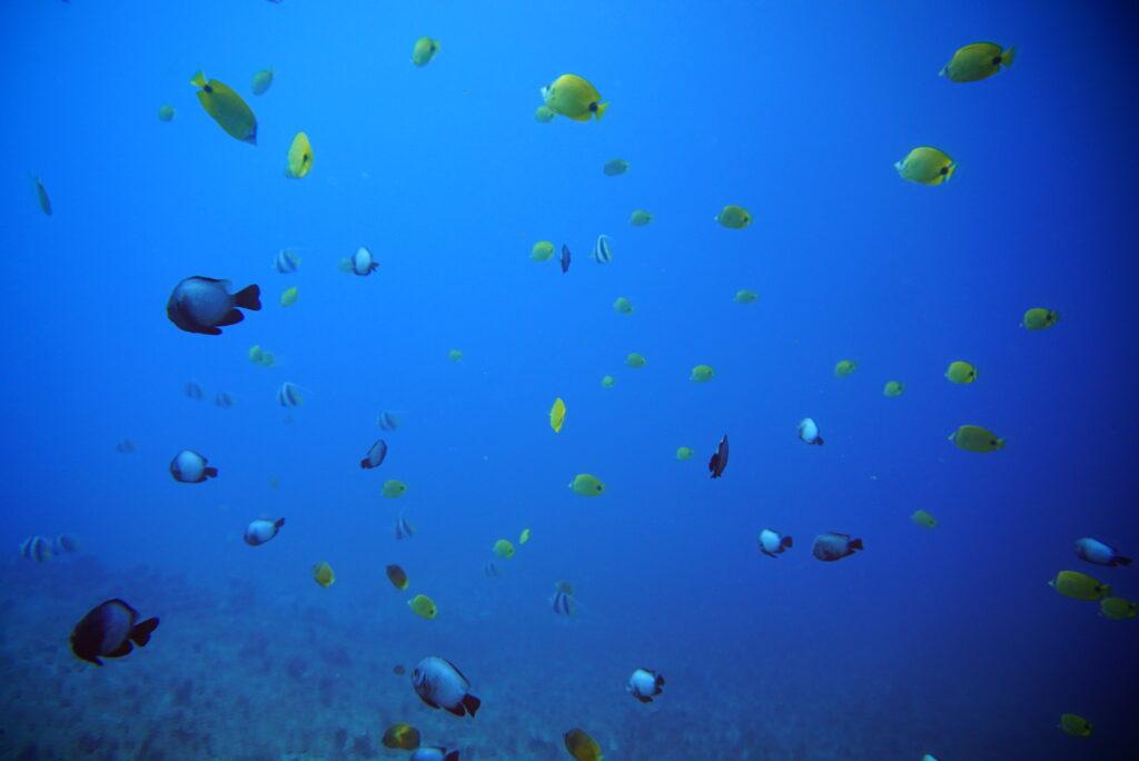 8月14日 クラブ活動 〜 水深30mに沈む飛行機と無数にある洞窟ダイビング!