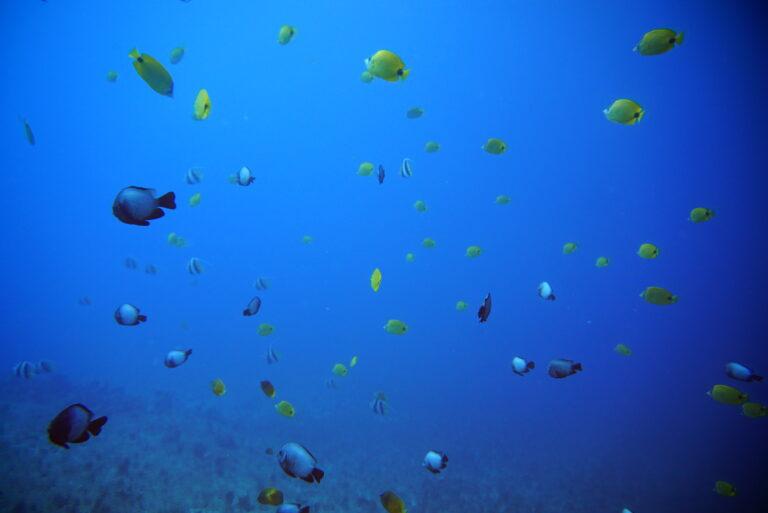 Read more about the article 8月14日 クラブ活動 〜 水深30mに沈む飛行機と無数にある洞窟ダイビング!