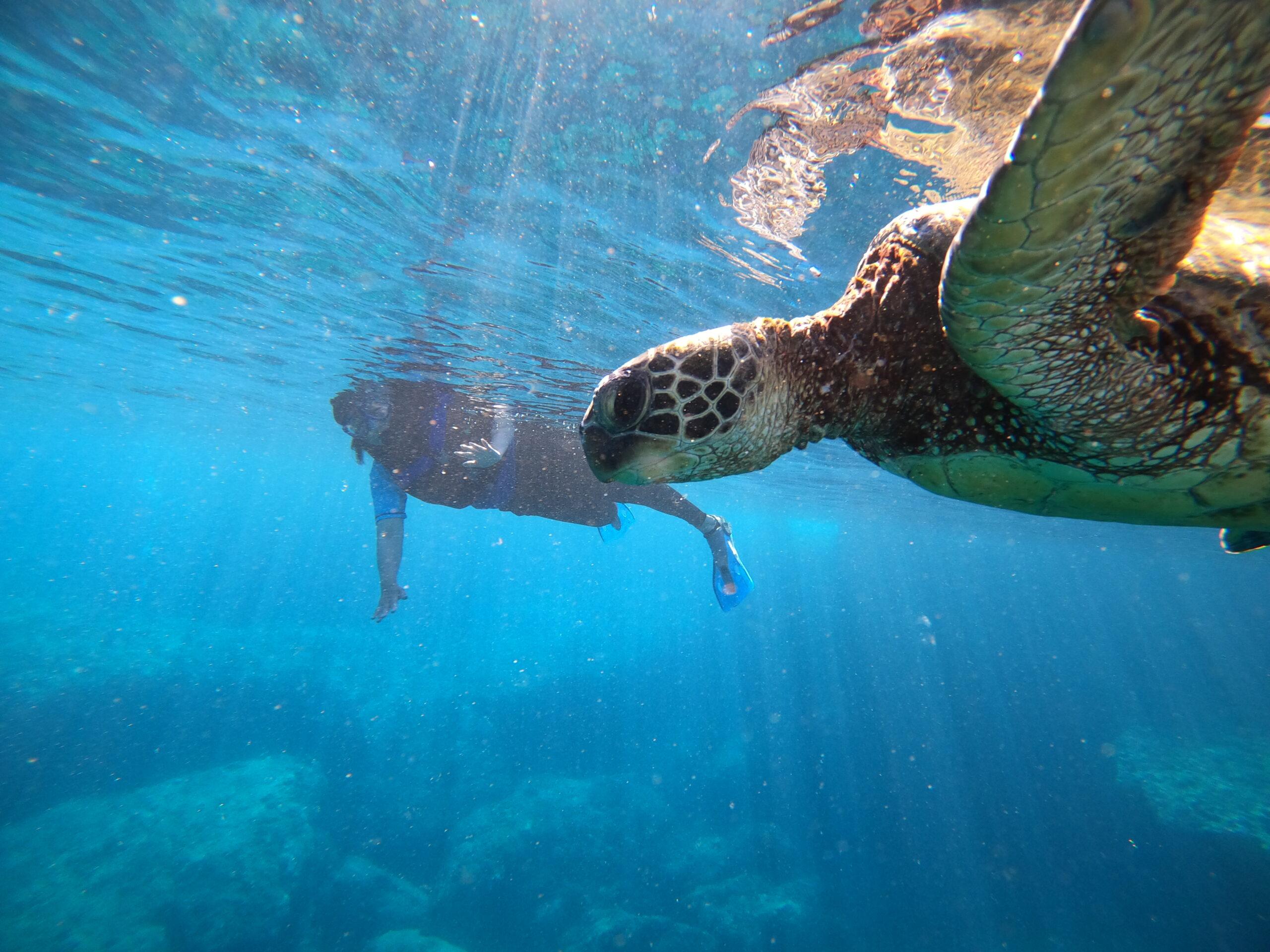 女性ひとり旅でも楽しめる!オリジナルツアーでハワイの大自然を満喫!